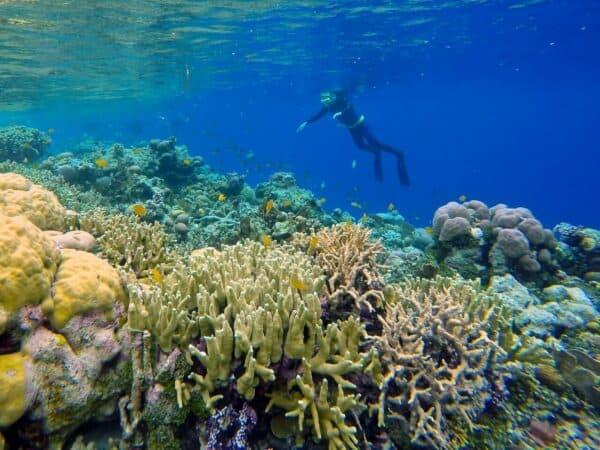 snorkeling in Solomon Islands