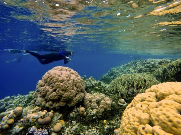 snorkeler in solomon islands