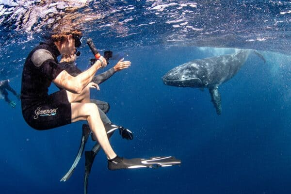 swim with humpback whales in Tonga