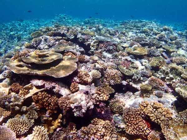 coral reef in Ulithi Atoll