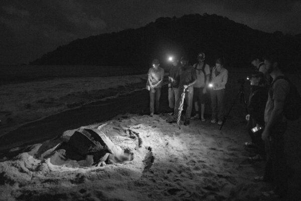 volunteers watch nesting sea turtle