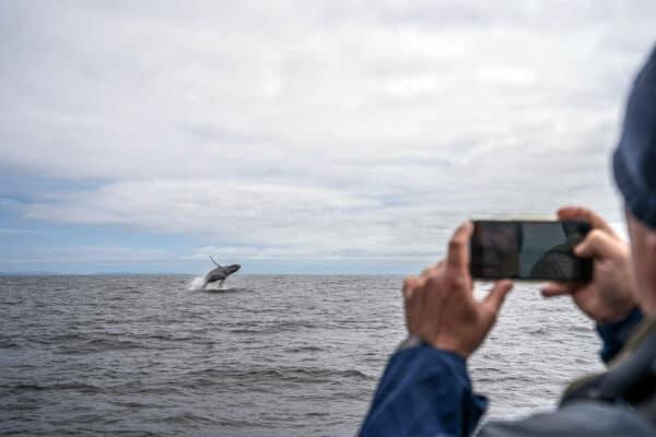 watching a whale breach