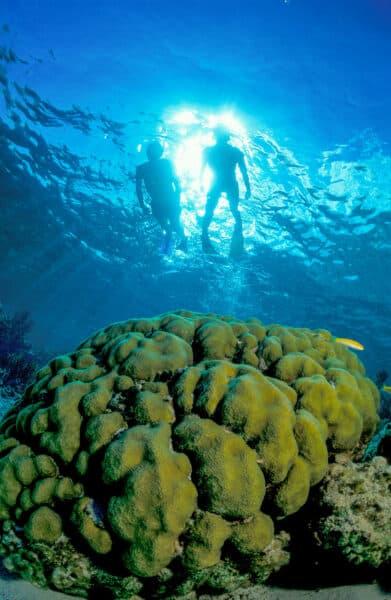 snorkeling on Bahamas trip