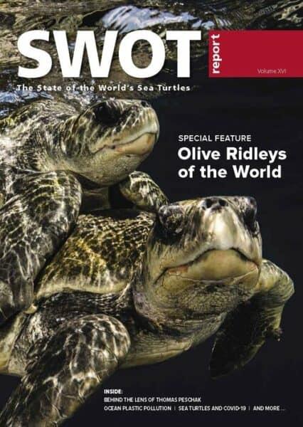 sea turtle report