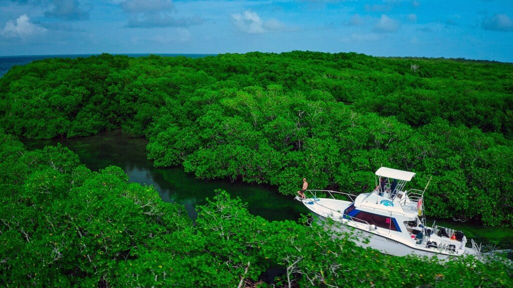 expedition travels through mangroves in belize