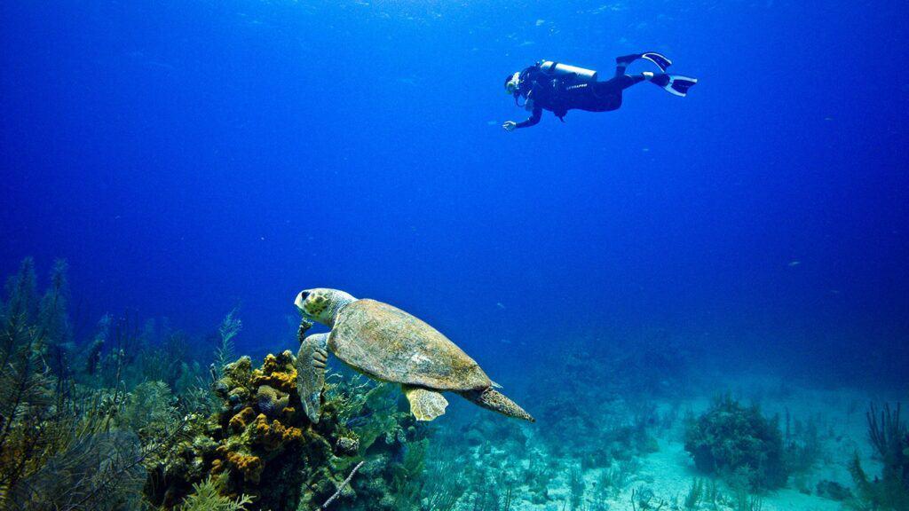 scuba diver with sea turtle in Belize