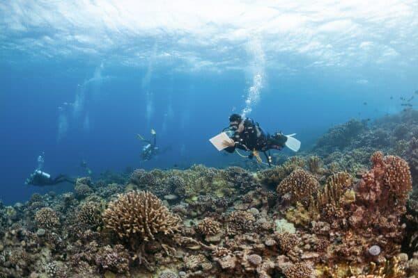 coral reef survey