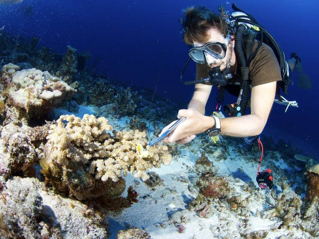 coral sample collection