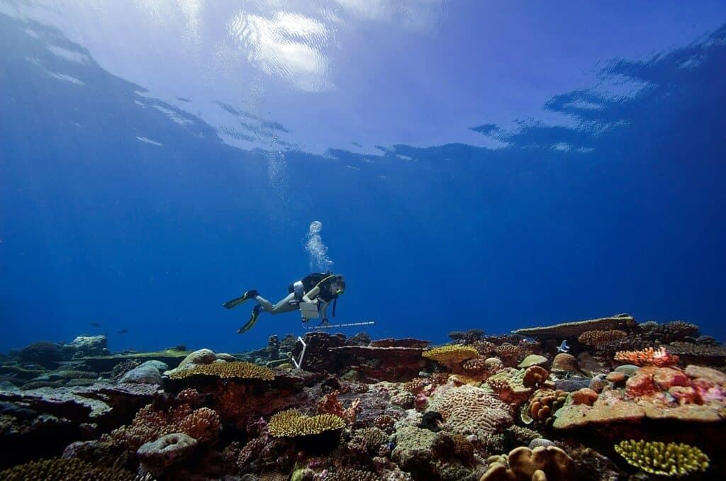 coral reef survey chagos archipelago