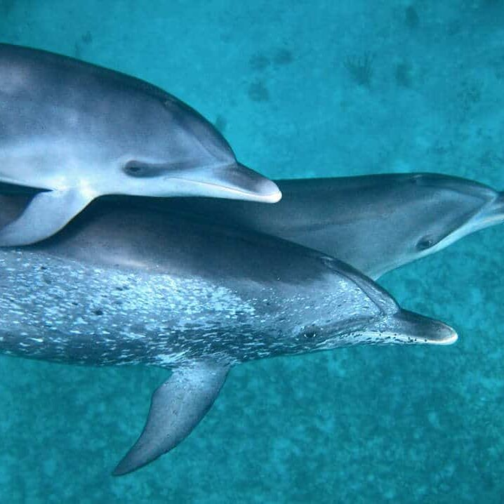 volunteer with dolphins bahamas